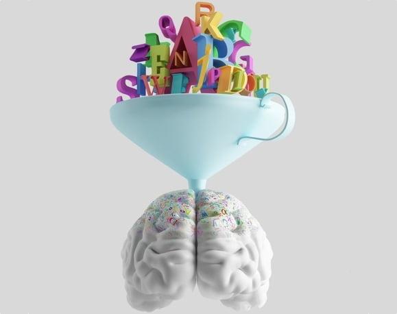 brain (wider)